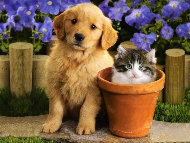 cat_and_dog11